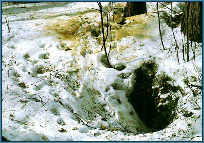 http://www.gorinov.spb.ru/07lisa07.jpg